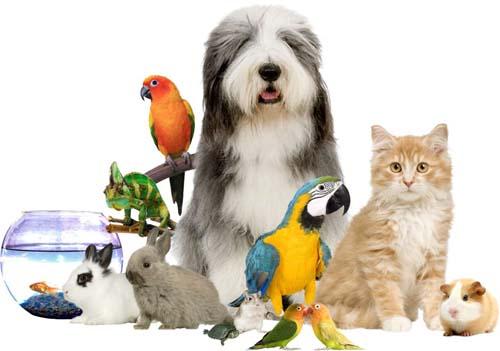 Mascotas variadas
