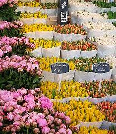 las flores nunca me haban llamado demasiado la atencin como motivo decorativo me parecan un poco demods y cursis pero una viaje a holanda hizo que