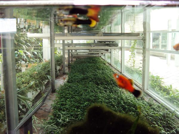 adems de las plantas puedes encontrar lminas de agua fuentes pequeos riachuelos con peces de bonitos colores y ms bien peceras con