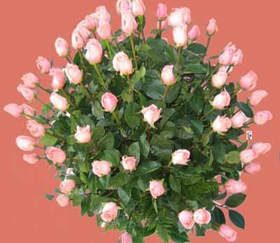 Iberflor El Placer De Regalar Y Recibir Flores Dolcecity Com