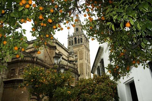 5 curiosidades sobre las famosas naranjas de sevilla - Orange en sevilla ...